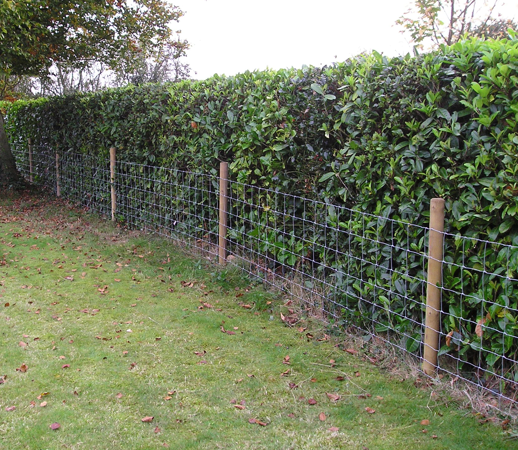 Stock netting hidden in a hedge